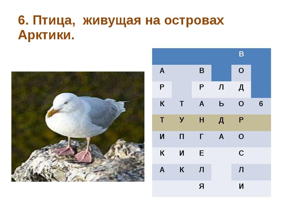 6. Птица, живущая на островах Арктики. В А В О Р Р Л Д К Т А Ь О 6 Т У Н Д Р...