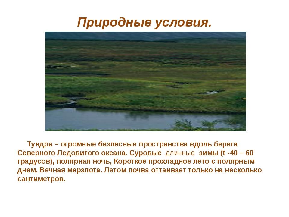 Природные условия. Тундра – огромные безлесные пространства вдоль берега Севе...