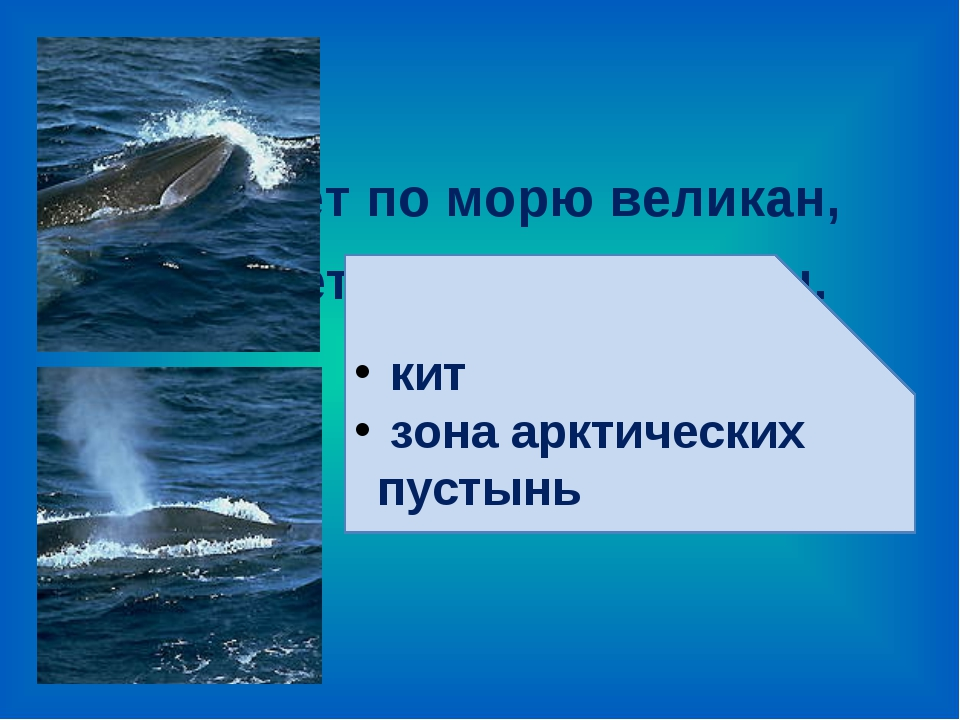 Плывёт по морю великан, Пускает из воды фонтан. кит зона арктических пустынь