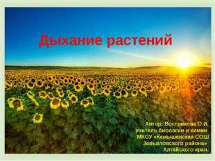 Дыхание растений Автор: Вострикова О.И. учитель биологии и химии МКОУ «Камыше