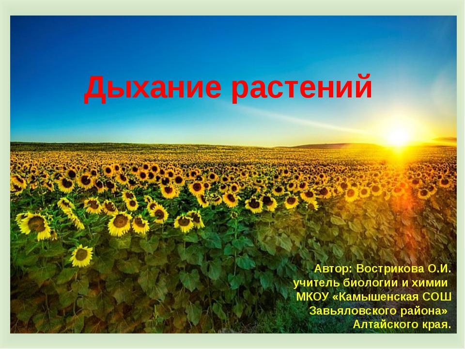 Дыхание растений Автор: Вострикова О.И. учитель биологии и химии МКОУ «Камыше...