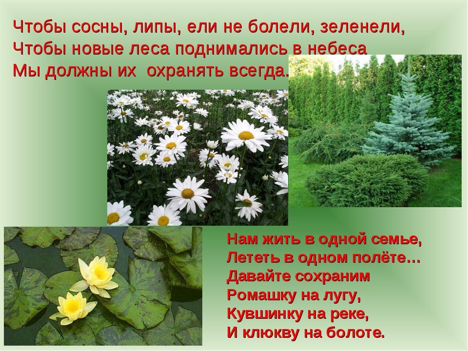 Чтобы сосны, липы, ели не болели, зеленели, Чтобы новые леса поднимались в не...