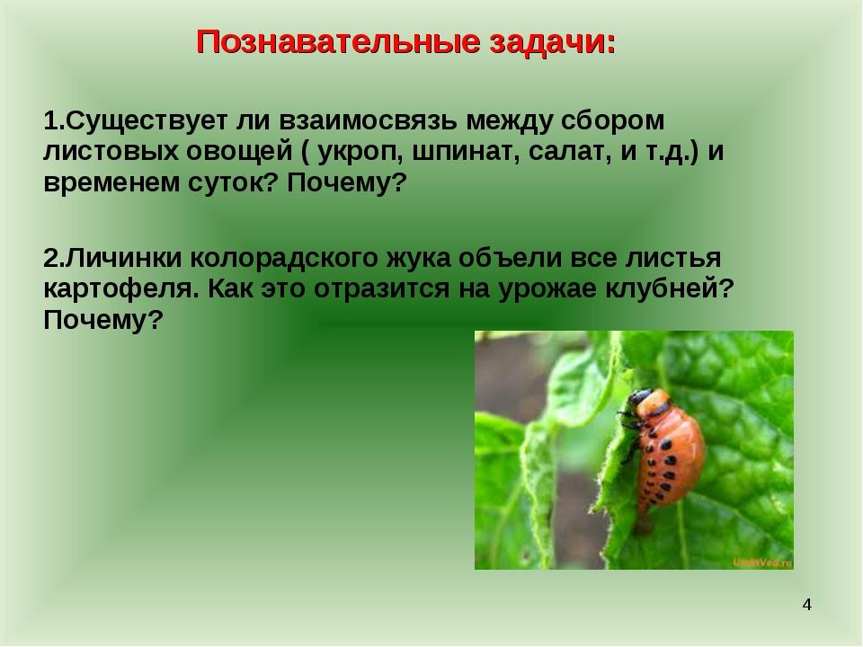 Познавательные задачи: Существует ли взаимосвязь между сбором листовых овощей...