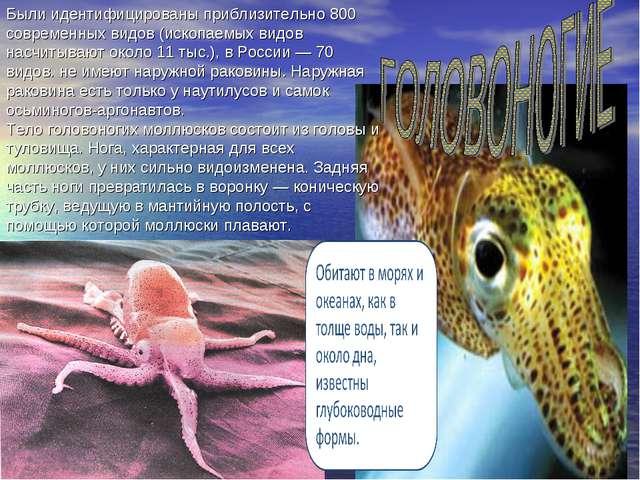 Были идентифицированы приблизительно 800 современных видов (ископаемых видов...