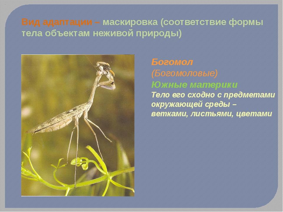 Вид адаптации – маскировка (соответствие формы тела объектам неживой природы)...
