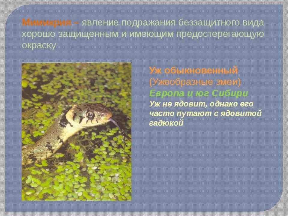 Мимикрия – явление подражания беззащитного вида хорошо защищенным и имеющим п...