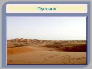 Фенек (Лисьи) Пустыня Сахара Огромные уши служат для теплоотдачи Вернуться на