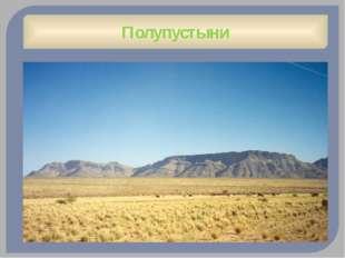 Золотистый бандикут (Бандикуты) Северная Австралия Сумчатое Хорошо развито об