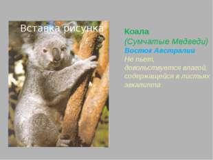 Выдра обыкновенная (Куньи) почти по всей Евразии Обтекаемая форма тела Ноздри