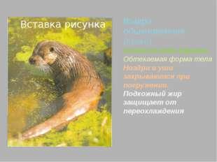 Список литературы 1. В мире дикой природы. Издатель: ООО «Интернейшн Мастерс
