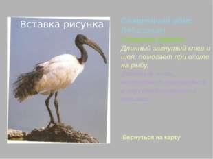 1.http://www.apus.ru –морские нетопыри 2. http://www.fotozveri.ru 3. yandex