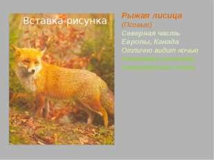 Рысь (Кошачьи) Северная часть Европы, Канада Густой мех защищает от холода, а