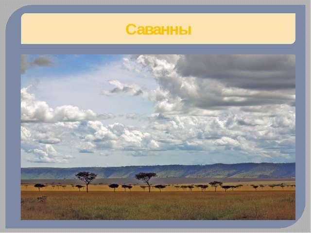 Африканский слон (Слоны) Африка, кроме северной Огромные уши слона увеличиваю...