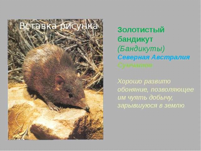 Туатара (Sphenodon punctatus) Новая Зеландия Единственный сохранившийся предс...