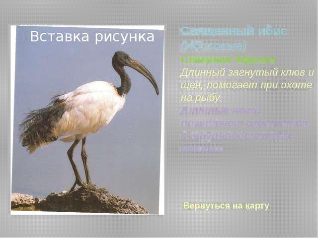 1.http://www.apus.ru –морские нетопыри 2. http://www.fotozveri.ru 3. yandex...