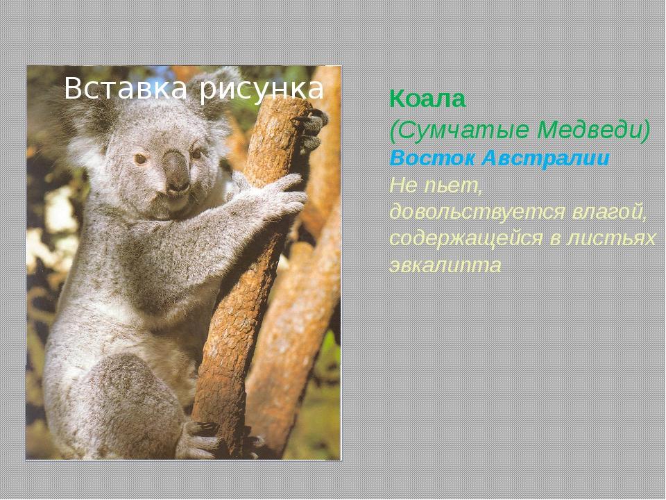 Выдра обыкновенная (Куньи) почти по всей Евразии Обтекаемая форма тела Ноздри...
