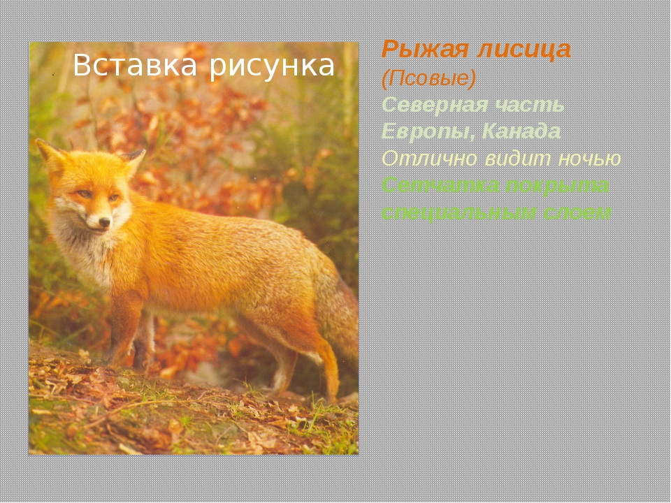 Рысь (Кошачьи) Северная часть Европы, Канада Густой мех защищает от холода, а...