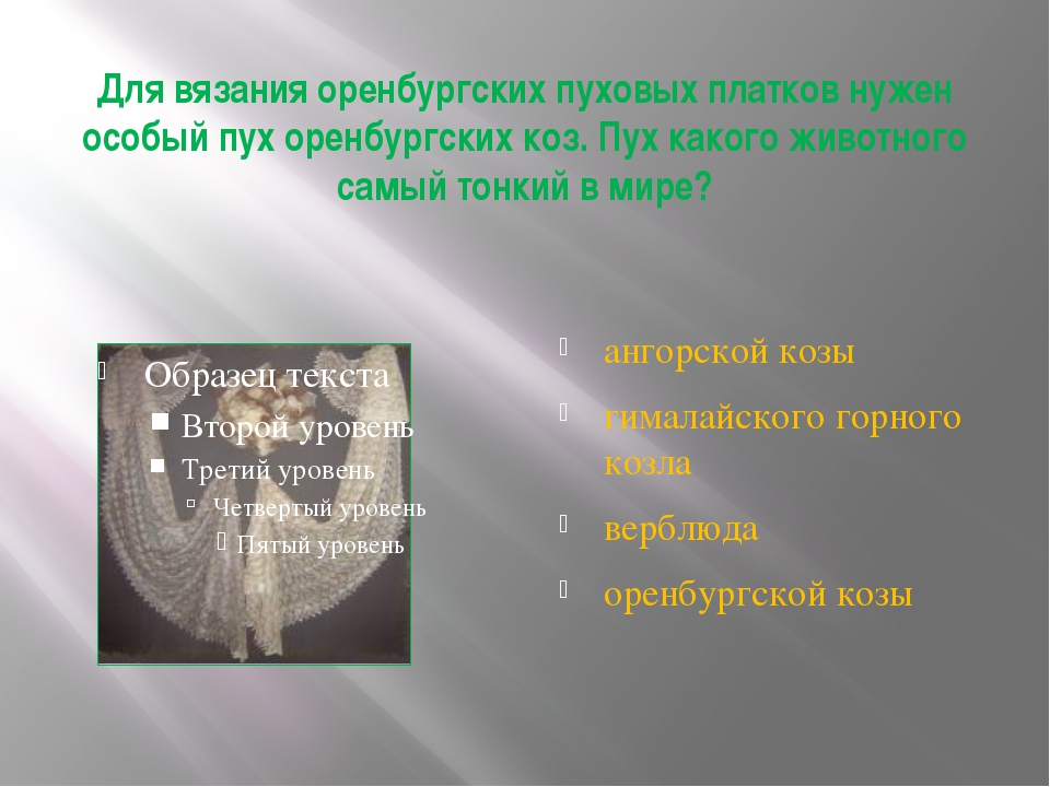 Для вязания оренбургских пуховых платков нужен особый пух оренбургских коз. П...