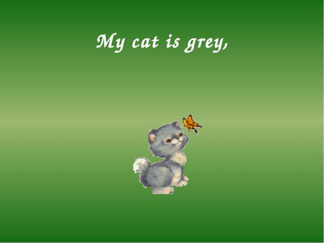 My cat is grey,