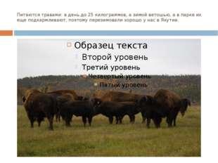 Питаются травами: в день до 25 килограммов, а зимой ветошью, а в парке их еще