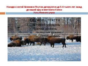 Находки костей бизонов в Якутии датируются до 5–6 тысяч лет назад  до нашей э