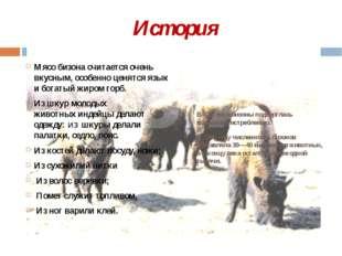 История Мясо бизона считается очень вкусным, особенно ценятся язык и богатый