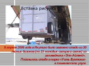8 апреля 2006 года в Якутию было завезено стадо из 30 лесных бизонов (по 15 м
