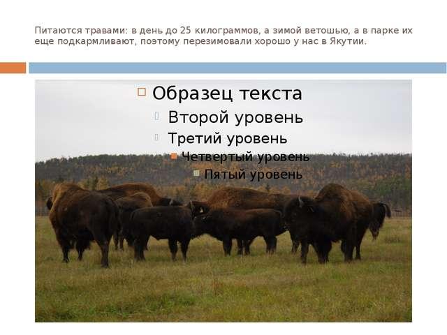 Питаются травами: в день до 25 килограммов, а зимой ветошью, а в парке их еще...
