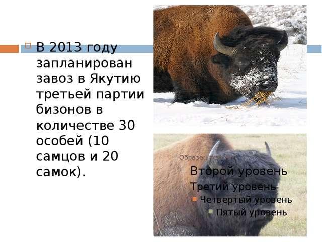 В 2013 году запланирован завоз в Якутию третьей партии бизонов в количестве 3...