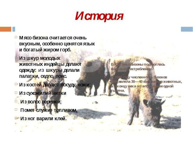 История Мясо бизона считается очень вкусным, особенно ценятся язык и богатый...