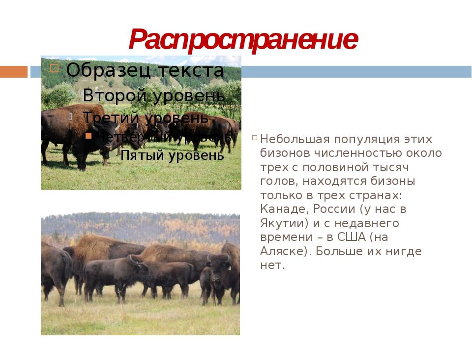 Распространение Небольшая популяция этих бизонов численностью около трех с п...