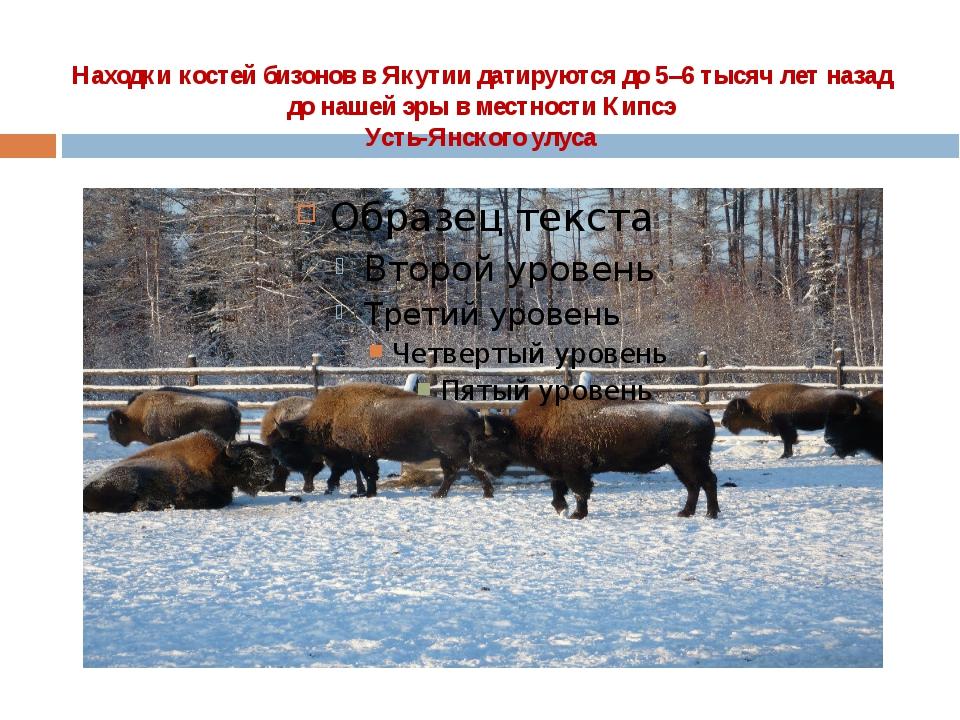 Находки костей бизонов в Якутии датируются до 5–6 тысяч лет назад  до нашей э...