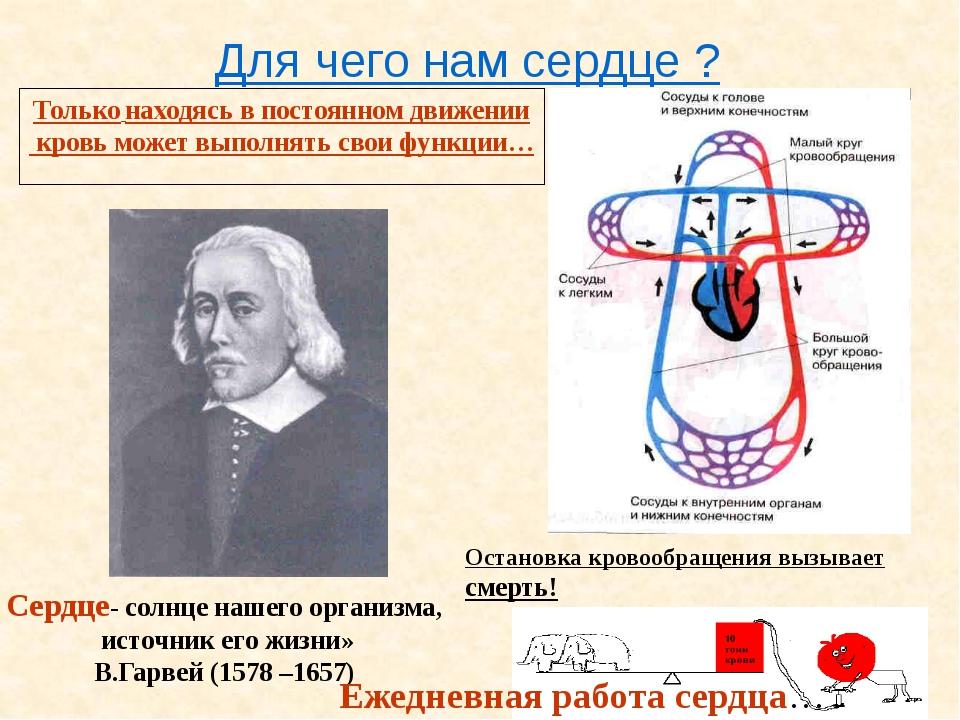 Для чего нам сердце ? Только находясь в постоянном движении кровь может выпол...