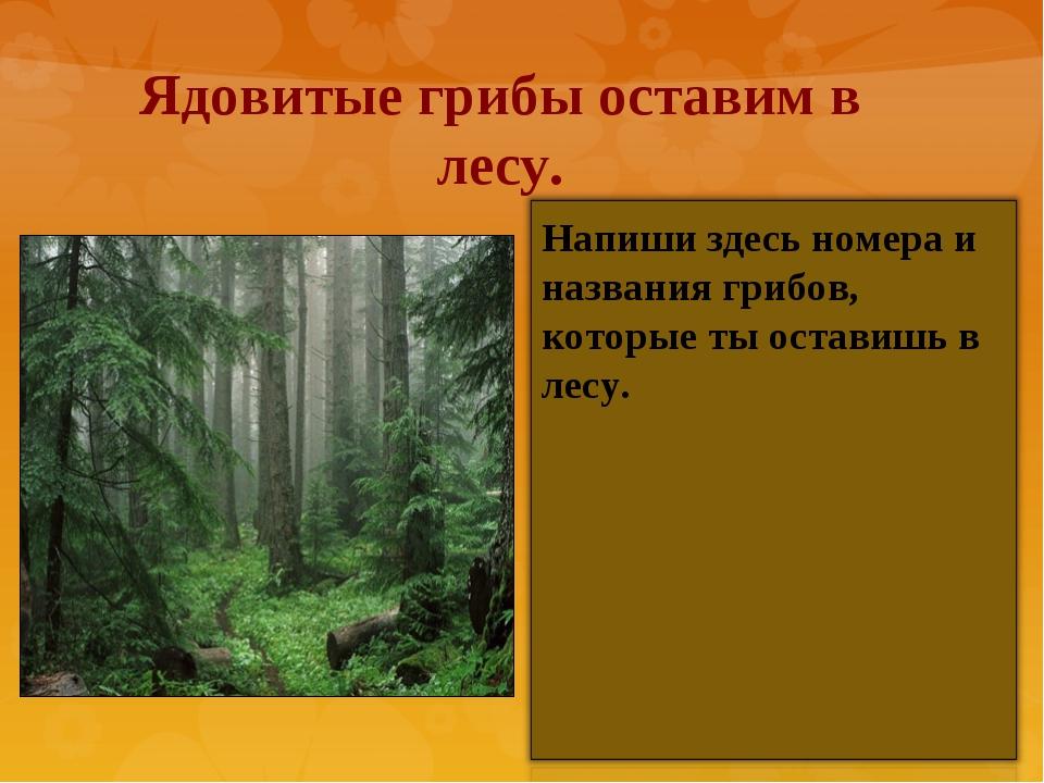 Ядовитые грибы оставим в лесу. Напиши здесь номера и названия грибов, которые...