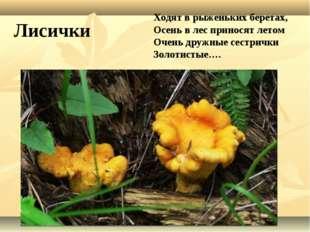 Ходят в рыженьких беретах, Осень в лес приносят летом Очень дружные сестрички