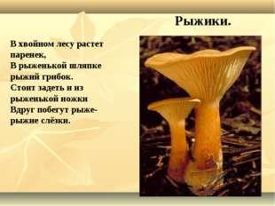 В хвойном лесу растет паренек, В рыженькой шляпке рыжий грибок. Стоит задеть