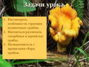 Задачи урока. Рассмотреть особенности строения шляпочных грибов. Научиться ра