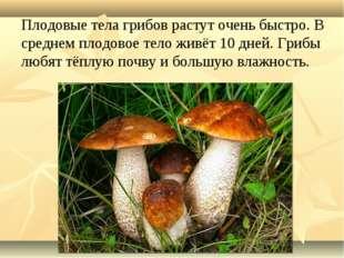 Плодовые тела грибов растут очень быстро. В среднем плодовое тело живёт 10 дн
