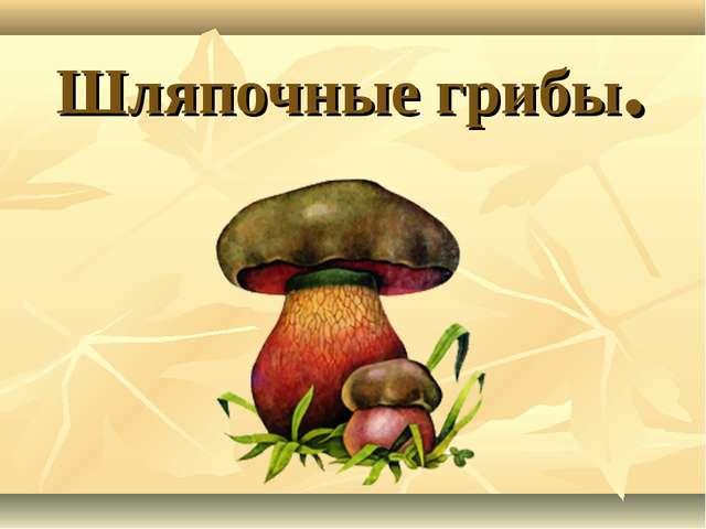 Шляпочные грибы.