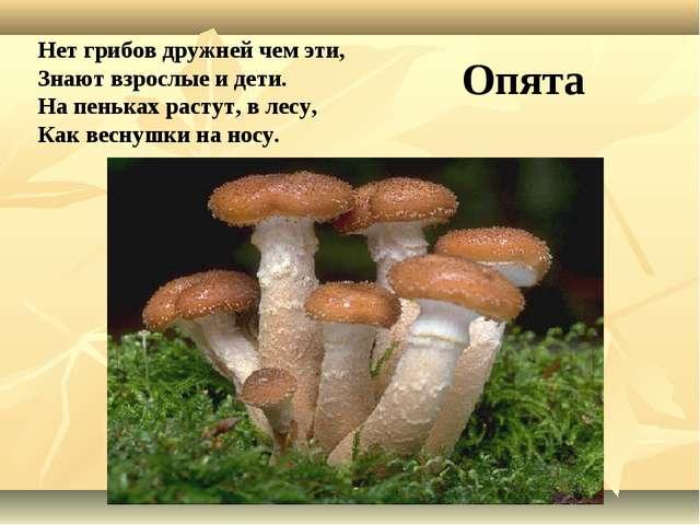Нет грибов дружней чем эти, Знают взрослые и дети. На пеньках растут, в лесу,...