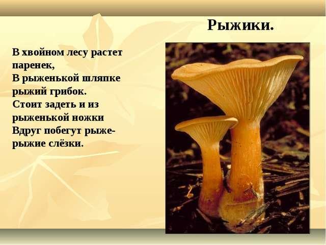 В хвойном лесу растет паренек, В рыженькой шляпке рыжий грибок. Стоит задеть...