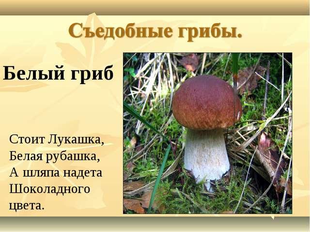 Стоит Лукашка, Белая рубашка, А шляпа надета Шоколадного цвета. Белый гриб