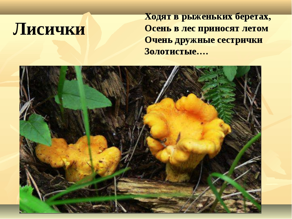 Ходят в рыженьких беретах, Осень в лес приносят летом Очень дружные сестрички...
