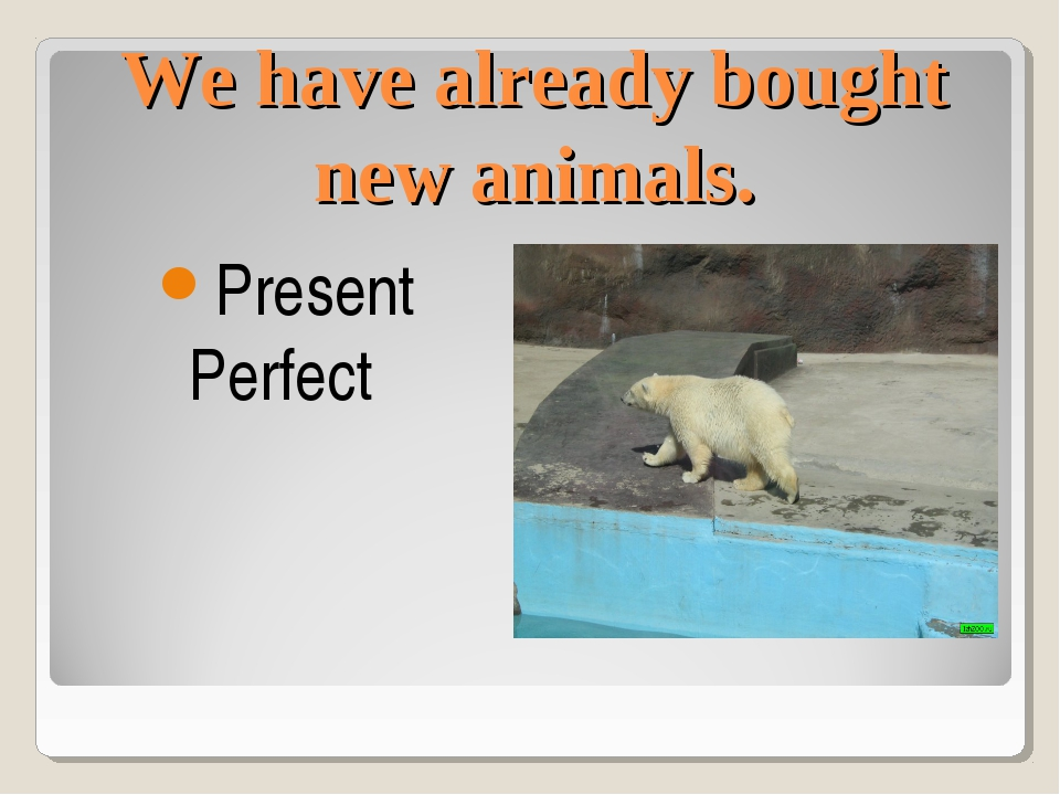 We have already bought new animals. Present Perfect