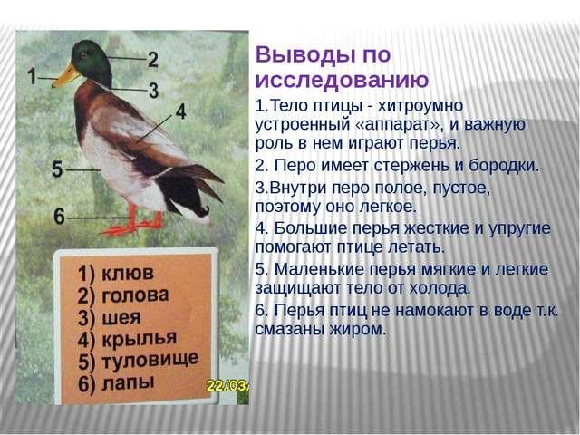 Выводы по исследованию 1.Тело птицы - хитроумно устроенный «аппарат», и важн...