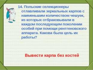 14. Польские селекционеры отлавливали зеркальных карпов с наименьшим количест