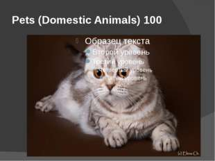 Pets (Domestic Animals) 100