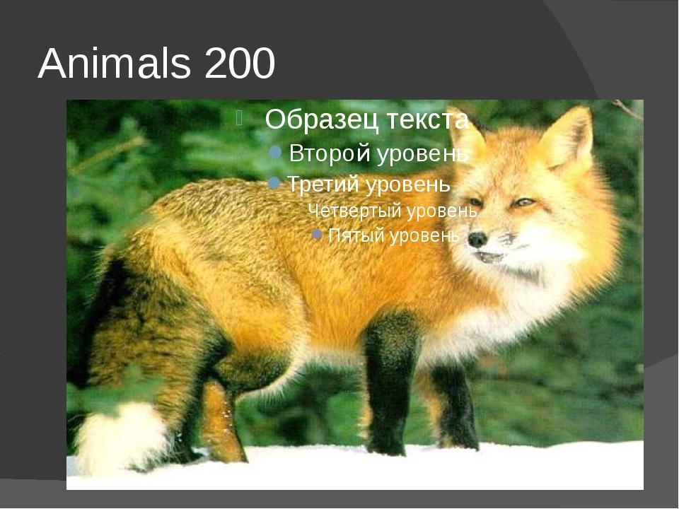 Animals 200