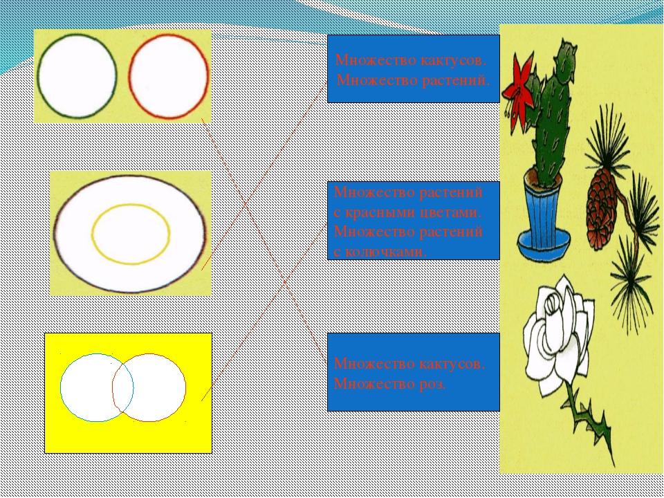 Множество кактусов. Множество растений. Множество растений с красными цветам...