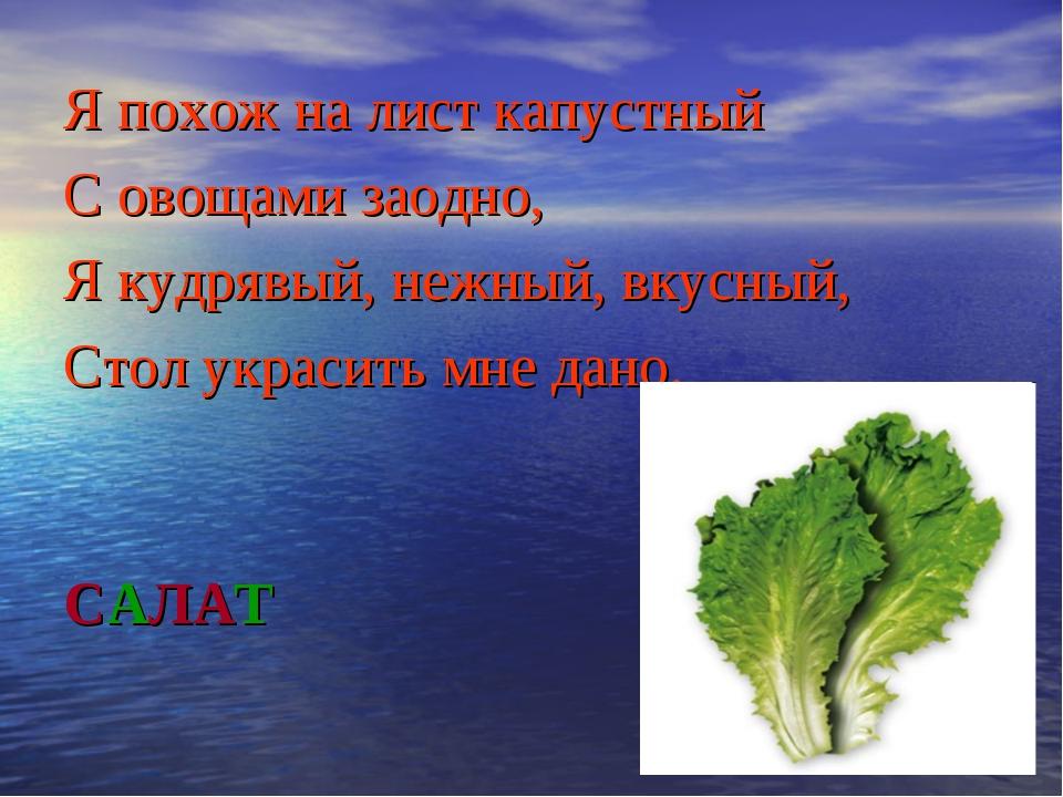 САЛАТ Я похож на лист капустный С овощами заодно, Я кудрявый, нежный, вкусный...